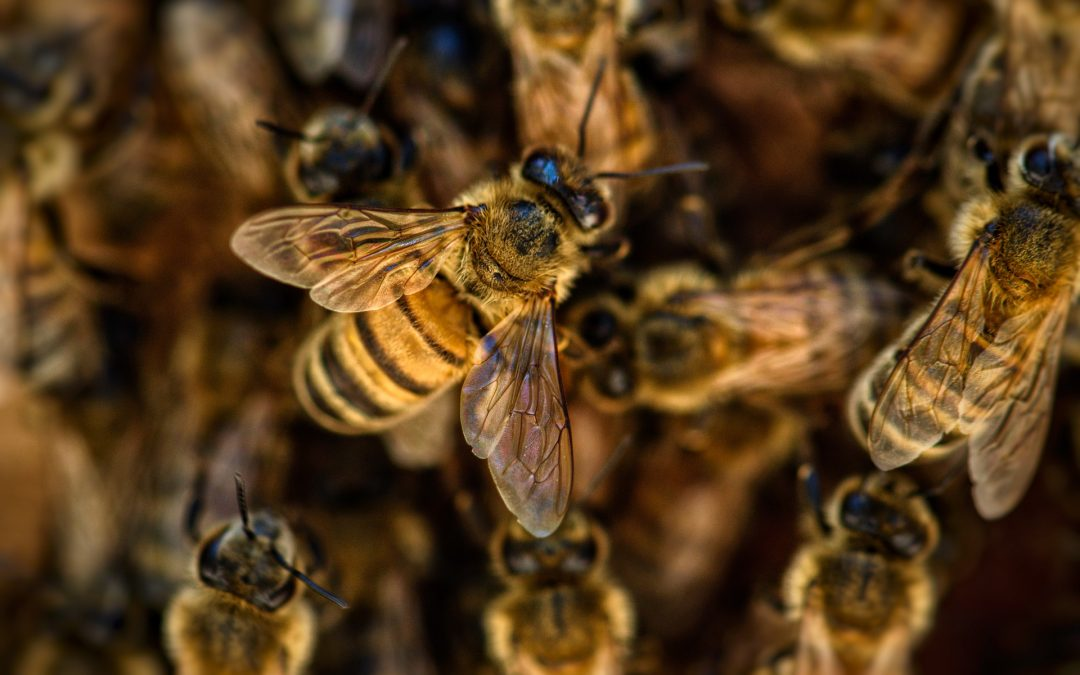 """Hebrew """"Bees"""""""